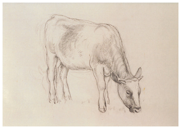 Tunnicliffe Card - Cow