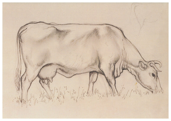 Tunnicliffe Card - Cow 2