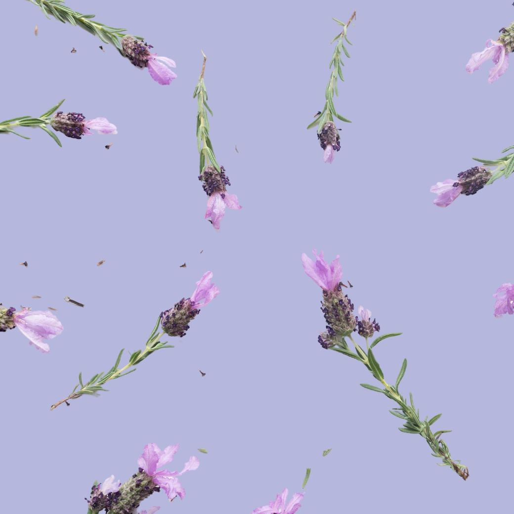 Photo: Lavender sprigs against a purple flat lay background