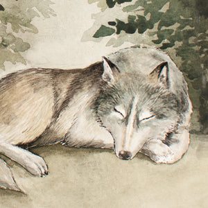 Sleeping In The Woods - Wolf