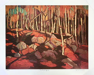 THE BIRCH GROVE (print) TOM THOMPSON