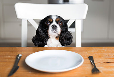 How Do You Feed a Dog Who is a Picky Eater?