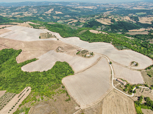Olivella & the Largest Organic Grove in Italy