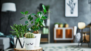 Freshen Up Your Home with House Plants