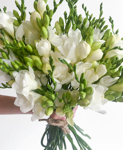Freesia's a Bird (45 stems)