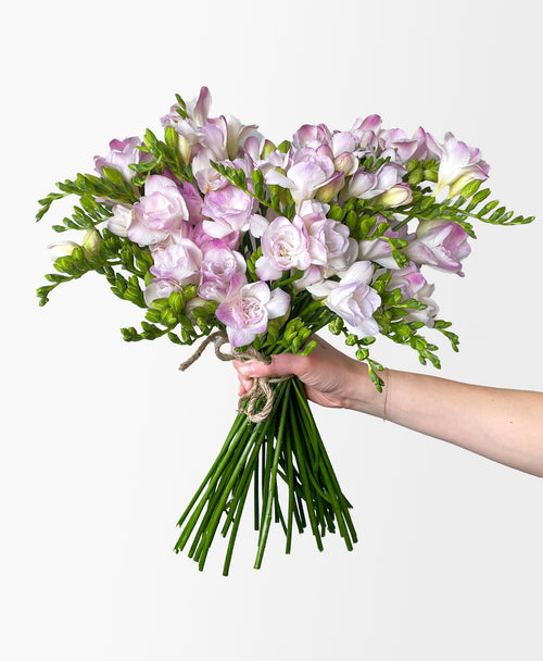 Heavenly Freesia (40 stems, 80+ blooms)