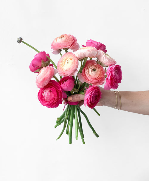 Send stunning pink and peach ranunculus in Toronto for the best flower delivery experience