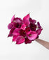 Super-Calla-fragilistic! (20 Stems)
