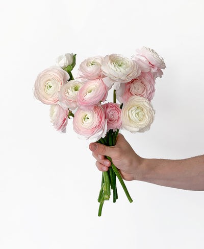 The Just Ranunculus! Bunch (12 stems)