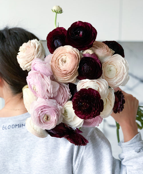 Cherry Pie Ranunculus (25 stems)
