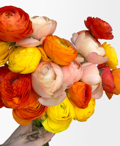 Orange You Glad Ranunculus (20 stems)