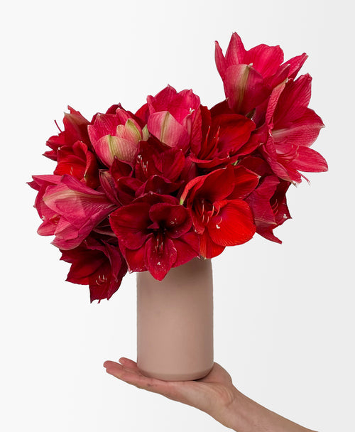 Holly Jolly Amaryllis (10 stems, vase included)