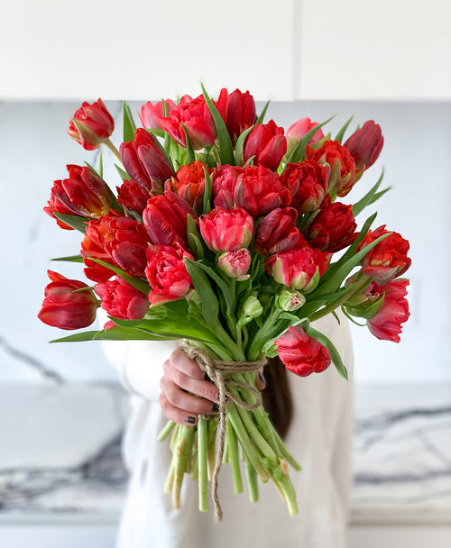 Elf Red Mixed Fancy Tulips (30 stems)