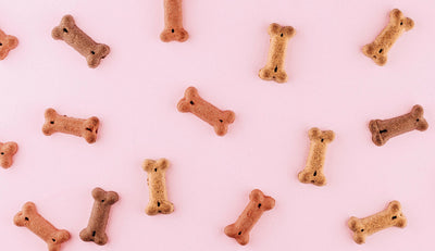 tips for treats: make snacks a positive part of your pet's total nutrition