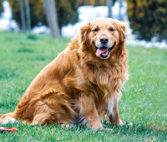 Pet foods and nutrition to help my dog lose weight