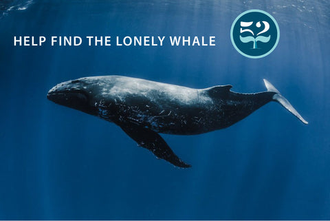 Lonely Whale