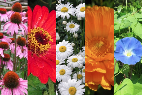Heirloom Flower Seed Collection