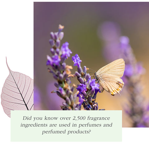 perfume allergy ingredients