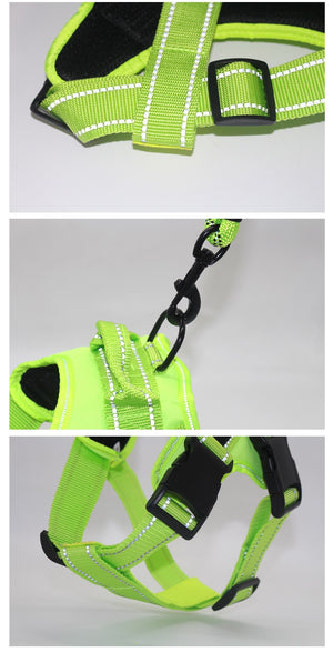 Harness With Personalized Custom Sticker Id Tags