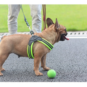 Nylon Heavy Duty Dog Harnesses