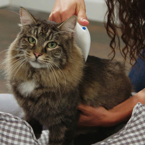 Woman using Flea Doctor on cat