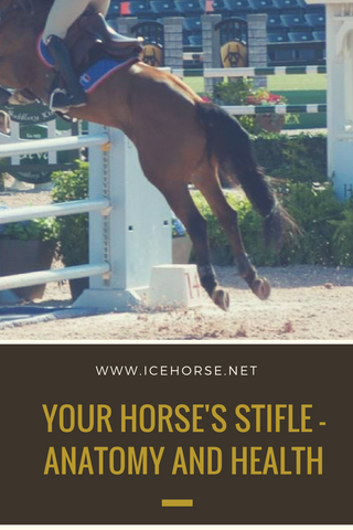 The Stifle Joint Of The Horse | IceHorse