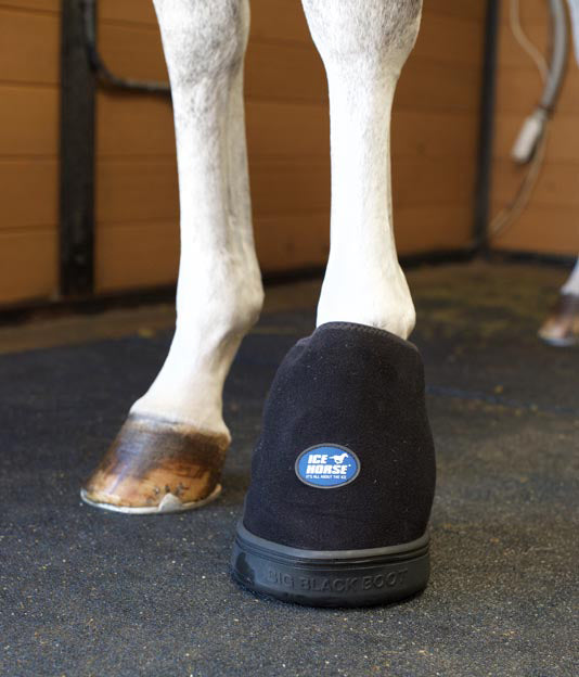 Cryotherapy is key for keeping the horse more comfortable.