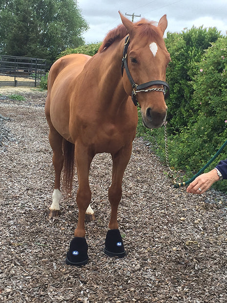Ice Horse Laminitis Kit will help cool the feet and keep your horse comfortable.