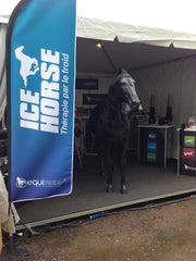 Ice Horse at the WEG