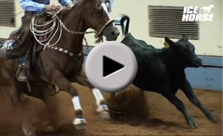 Watch a video to decide which Ice Horse Product is right for you?