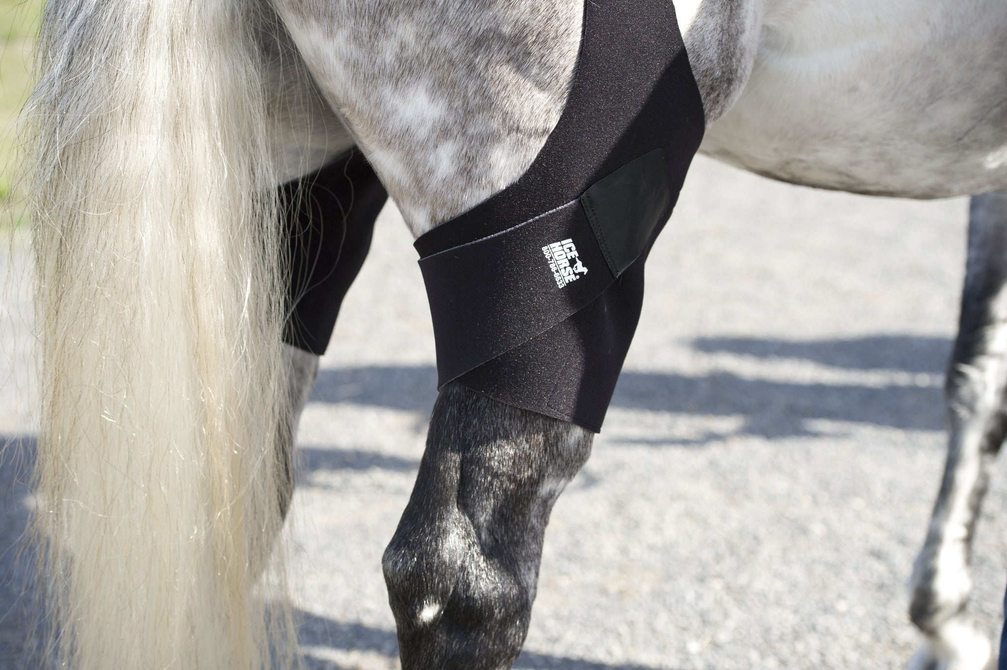 Leg Wrap to Prevent Stifle Injuries in Horses | IceHorse