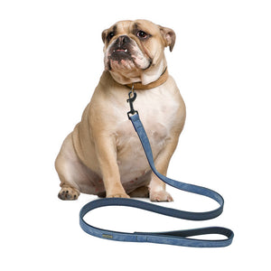 Wearly Dog Leash - Wearly Collars