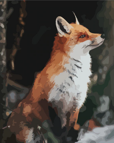 Fox Portrait - Drop Of Colour