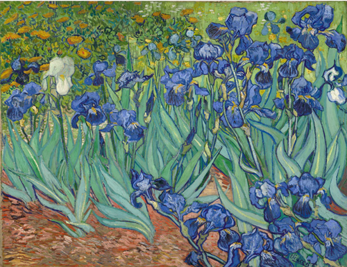 Vincent Van Gogh - Irises - Drop Of Colour