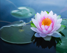 Load image into Gallery viewer, Water Lily - Drop Of Colour
