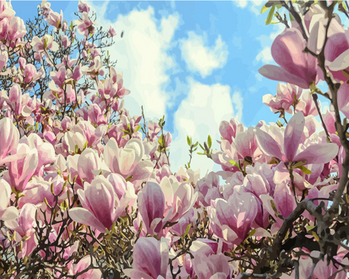 Magnolia Painting - Drop Of Colour