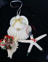 Scallop Shell  Angel Ornament  set of 3