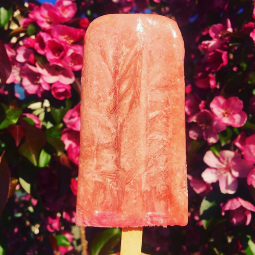 Calgary frozen vegan treat | Rhubarb Elderflower Ice Pop
