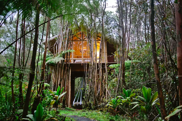 Tropical Hawaiian Tree House Airbnb
