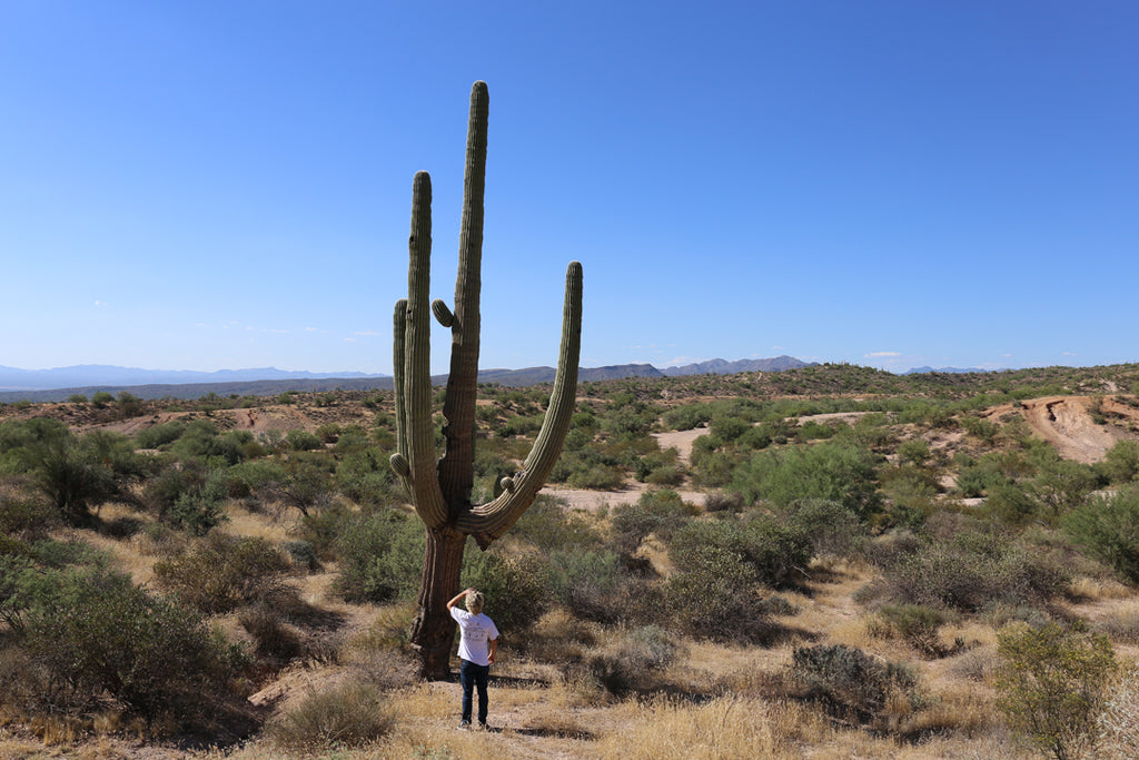 Saguaro National Park MNKR Blog