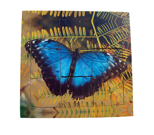 Layered Life Cycle: Butterfly