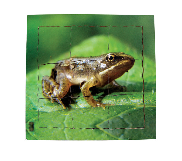 Layered Life Cycle: Frog