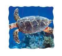 Layered Life Cycle: Turtle