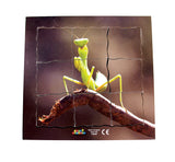 Layered Life Cycle: Praying Mantis