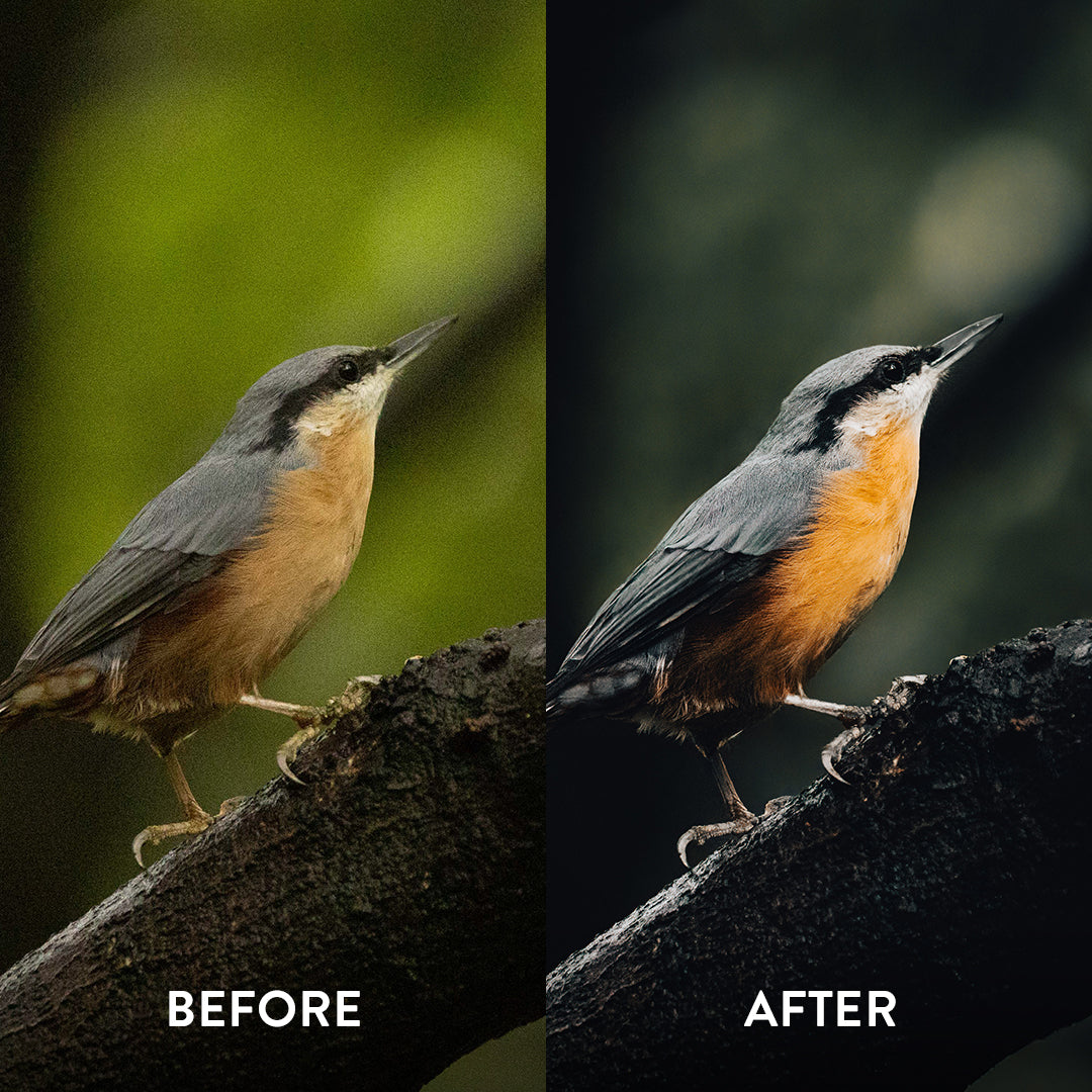 Topaz DeNoise Before And After Example