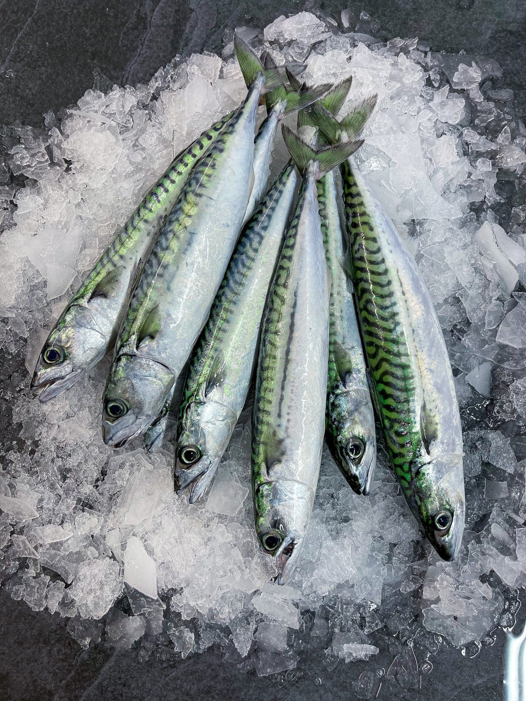 Fresh Mackerel - S&J Fisheries