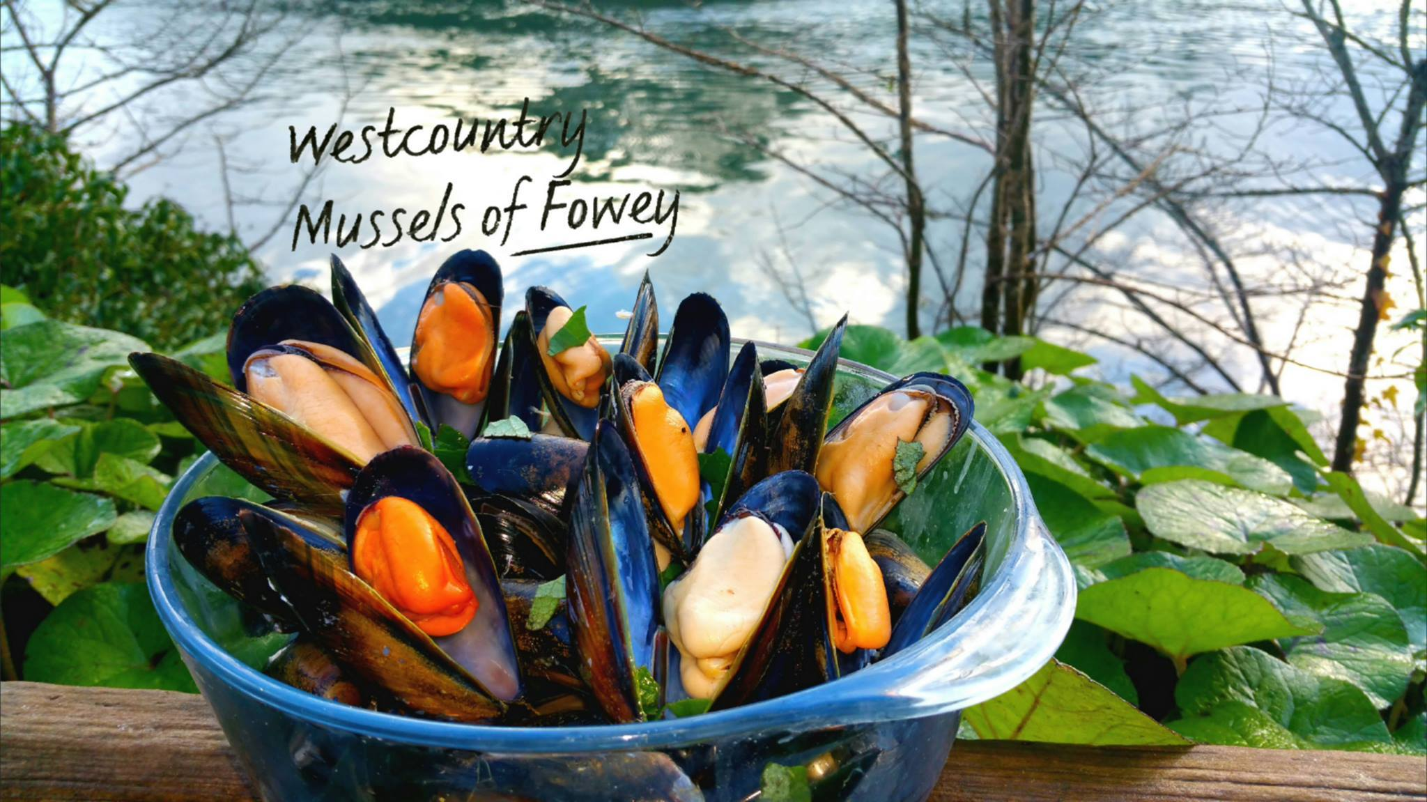 Fresh Westcountry Mussels - S&J Fisheries