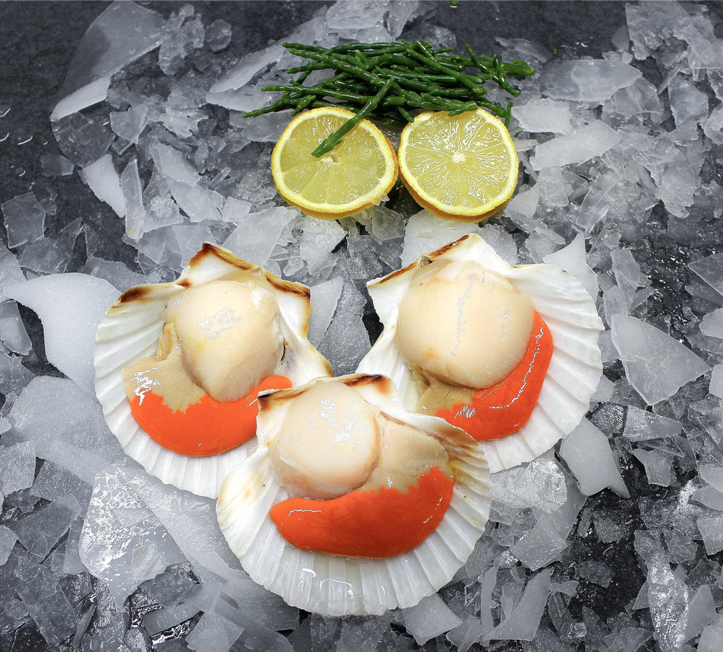 Local Scallops - S&J Fisheries