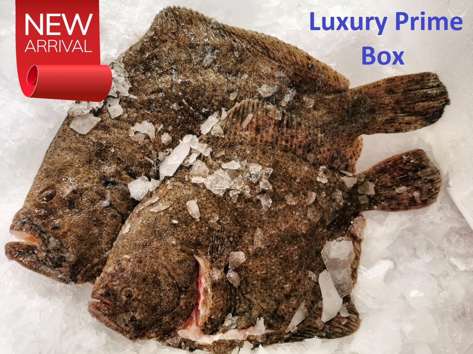 """Luxury Prime Box!"" - S&J Fisheries"