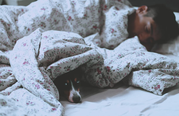 Your Dog Sleep In Your Bed